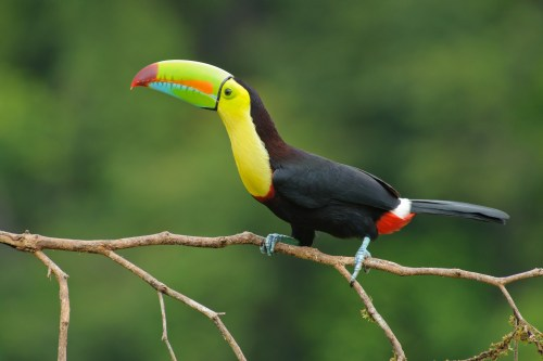 A toucan in Costa Rica.